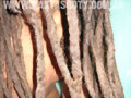 DREADLOCKS DREADS RASTAS