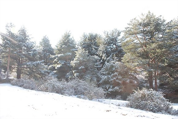 BOSQUE NEVADO