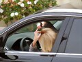 Claire Holt en West Hollywood, LA (Dec 6, 2014)